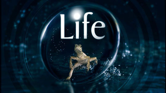 Discovery's Life To Live Large In HD This Sunday