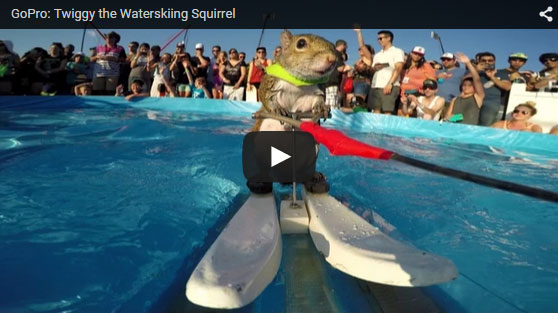 Watch this GoPro Original with Twiggy the Waterskiing Squirrel