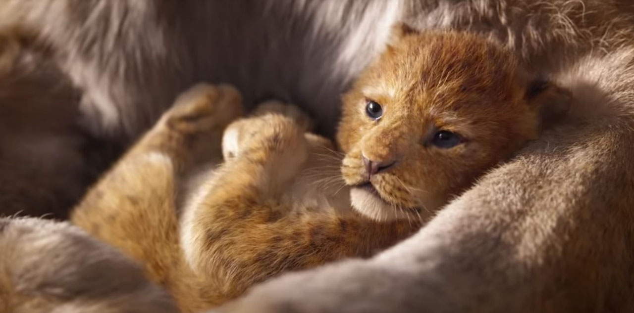the-lion-king-2018-disney-live-action-still-1