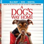 'A Dog's Way Home' Blu-ray, Digital & DVD Release Dates