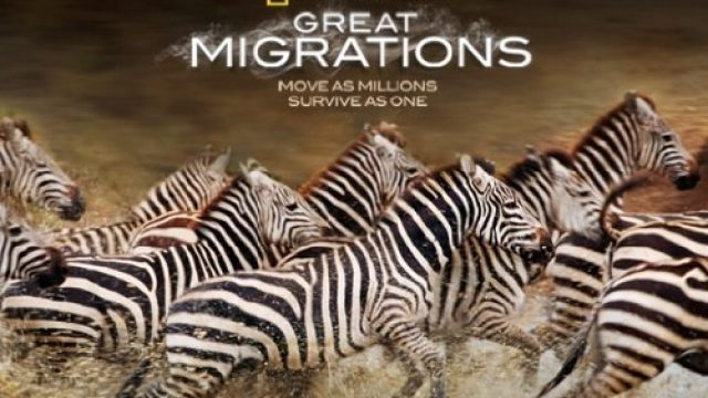 Great-Migrations-Season-1-Amazon-VOD.jpg