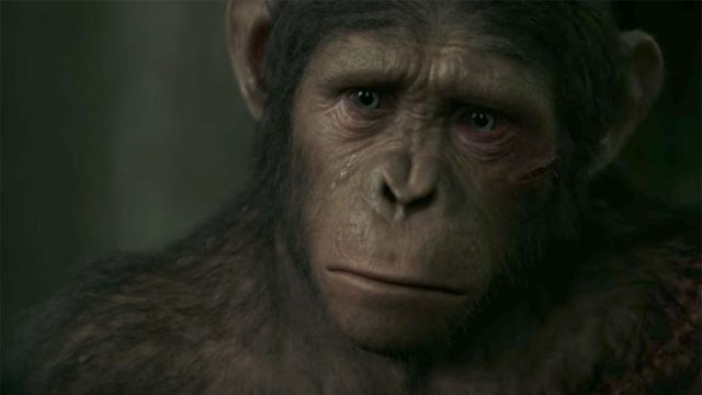 caesar-planet-of-the-apes.jpg
