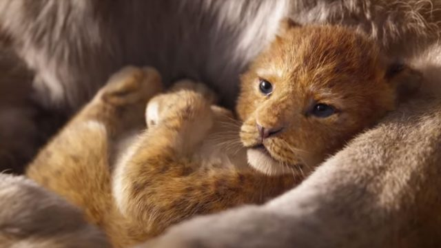 the-lion-king-2018-disney-live-action-still-1.jpg